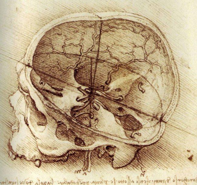 leonardo-da-vinci-anatomy-9