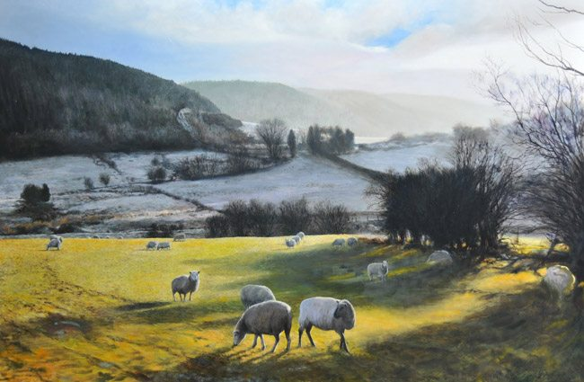 HarryRobertson-Sheep-near-Wrexham