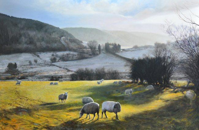Sheep-near-Wrexham-fixed2