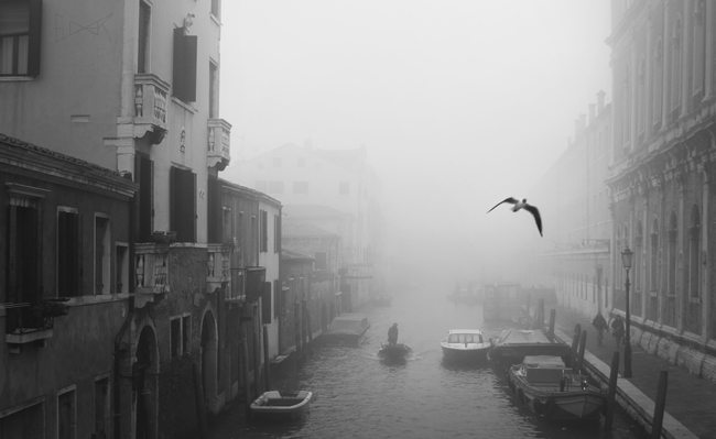 Good or Great Photography-Fog Bird Venice-Glover