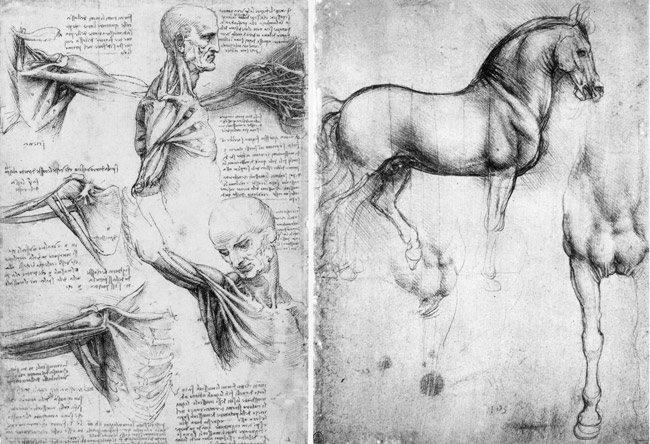 Da_Vinci-shoulderandneck-horse