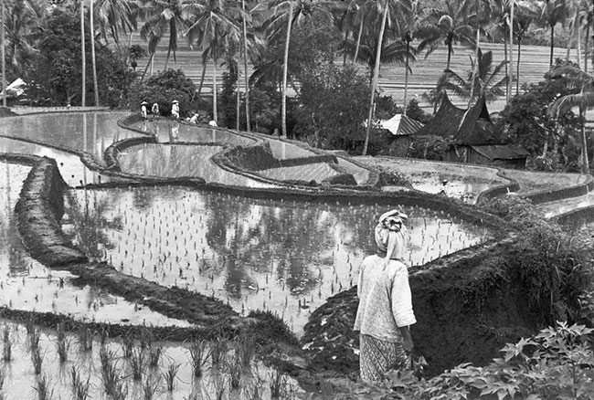 Henri-Cartier-Bresson---Sumatra,-Indonesia,-1950
