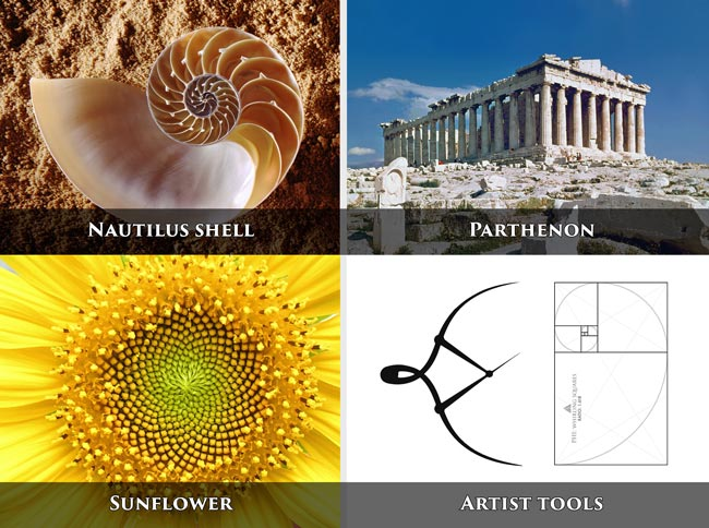 golden-ratio-in-nature-and-structures-Parthenon-nautilus-shell-sunflower-phi